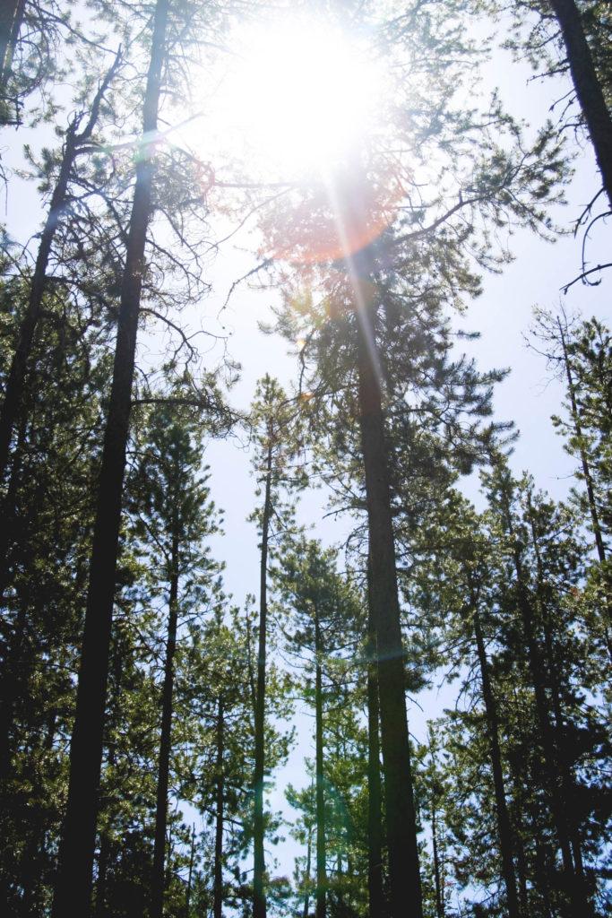 Bosques EcoAdaix