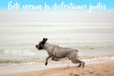 Playas para perros de España