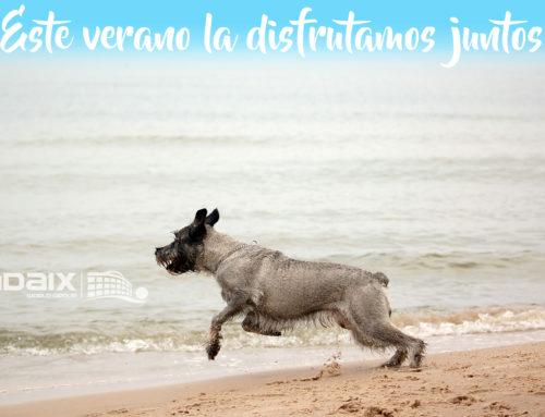Playas para perros en España para este verano